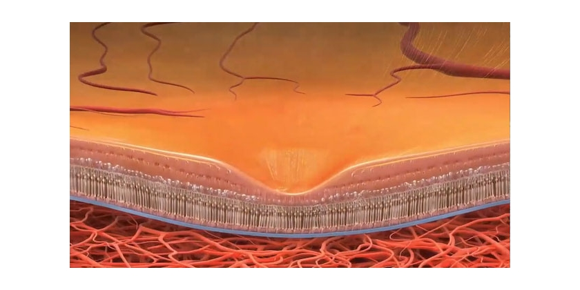 Scientists find potential target for dry AMD
